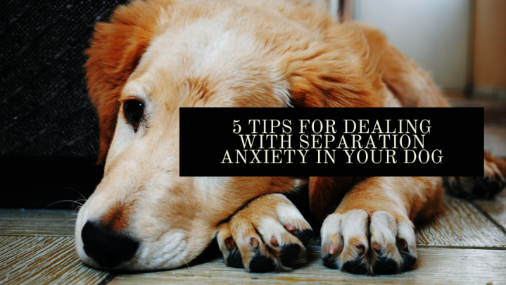 5 Tips for Dealing with Separation Anxiety in yourDog
